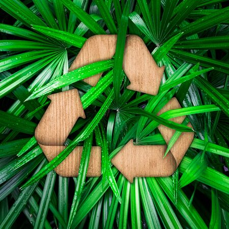 Wood texture recycle sign on green tropical leaves . Ecology concept . Go Green .