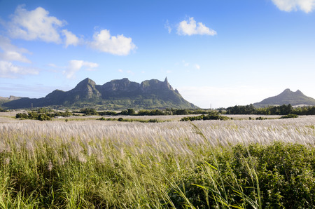 Pieter Both Mountain with sugar cane fields, Mauritius