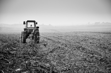 field work: Agriculture field work under the rain Stock Photo
