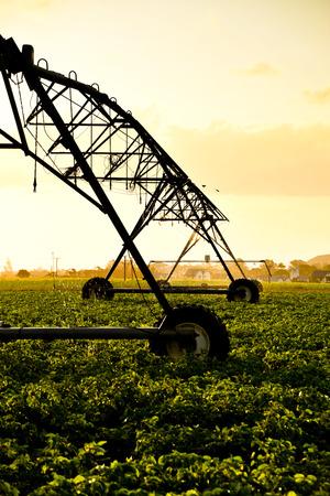 Irrigation pivot watering sugar cane fields Stock Photo