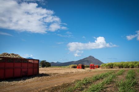 Transportation of sugar cane