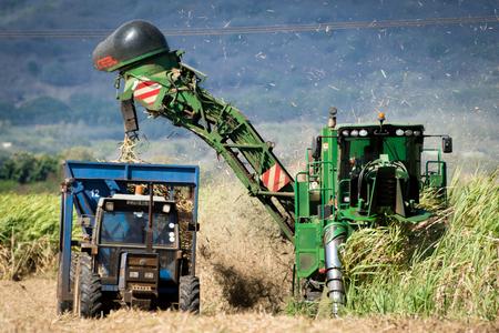 Mechanical harvesting of sugarcane