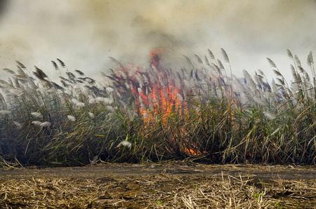 Sugar Cane - Burning Sugar Cane Fields Stock Photo