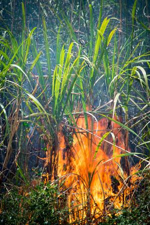 Sugar Cane - Burning Sugar Cane Fields Stok Fotoğraf