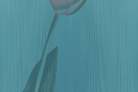 Colourful blue-green background with a tulip, artful