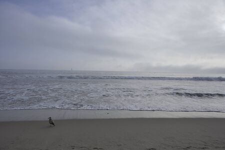 Beach and sea of Santa Monica in California, sun shining through a cloudy sky, seabird sitting on the sand next to photographer, gulls flying in the sky over the pacific Stok Fotoğraf
