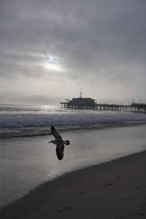 Particularly beautiful shadowy mood at the pier of Santa Monica, sun shining through the cloudy sky and seabird flying over near the photographer, a shadow on the sand at the beach, foaming spray