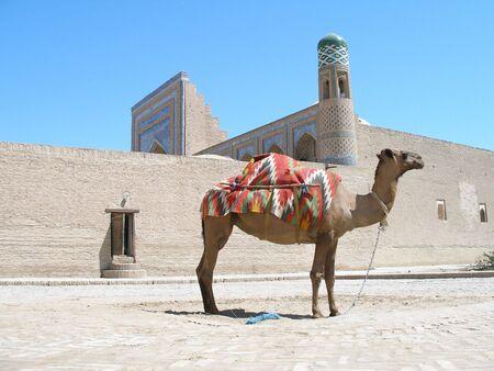 Camel in Khiva, Uzbekistan Stock Photo
