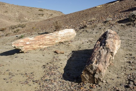sarmiento: Petrified forest in Patagonia