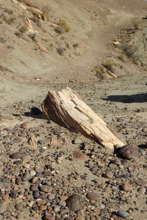 sarmiento: Petrified wood in Patagonia