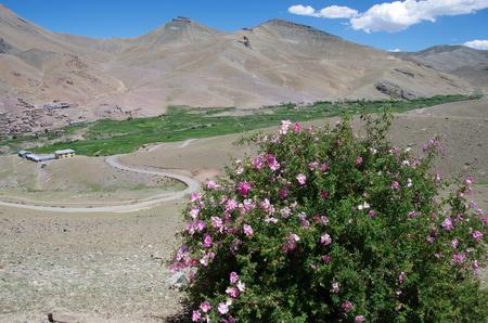 Landscape near Kargil in Ladakh, India
