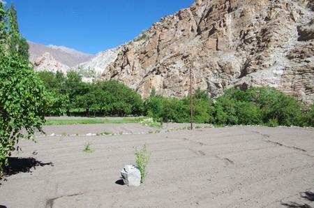 Agriculture in Ladakh, India