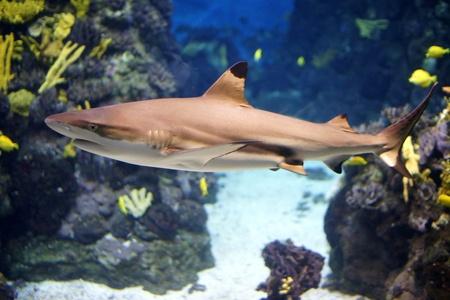 Shark Stok Fotoğraf