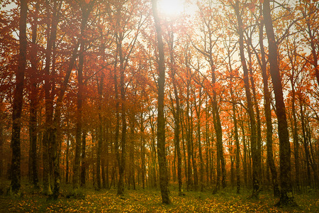 olympus: Autumnal forest in the mythical Mount Olympus