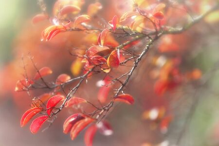 path to romance: Dreamy autumnal leaves