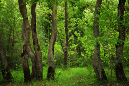 Picturesque tree trunks in a dreamy green temperate forest Banco de Imagens