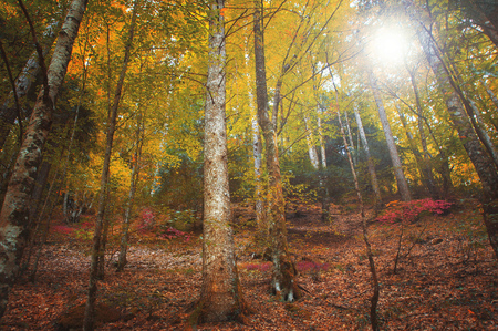 Colorful autumnal forest in the mythical Mount Olympus - Greece