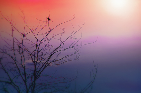 Contemporary art - a single bird sitting on the top of a tree while the sun is setting