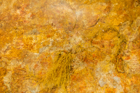 A riverbed of orange coloured sedimentary rock with beautiful patterns and reflection 版權商用圖片