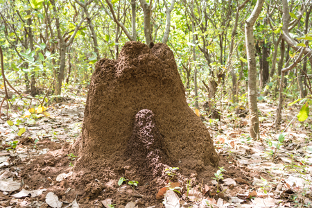 An ant hill in the middle of the forest.