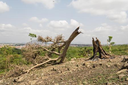 Deforestation by burning