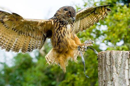 flew: owl flew to a tree trunk
