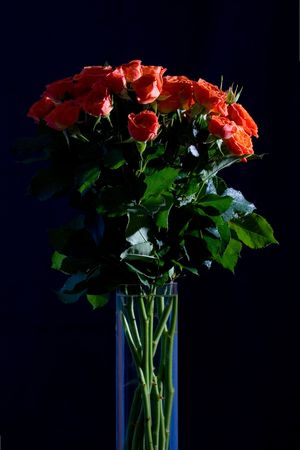 long stem: Beautiful wet roses in a vase on black background
