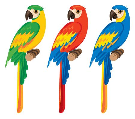 vector set of three birds parrots macaws