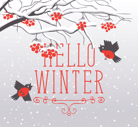 Vector winter landscape with snow-covered branches and red bunches of a Rowan tree and bullfinches in the snow in flat style. Lettering Hello winter.