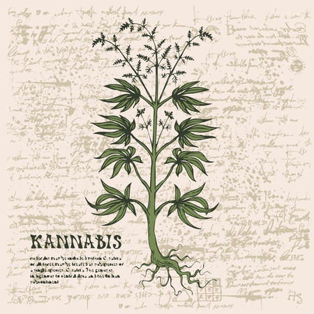 Vector banner with hand-drawn cannabis plant on abstract old papyrus background or grunge style manuscript. Hemp, Cannabis or marijuana, medicinal plant. Smoking weed Illustration