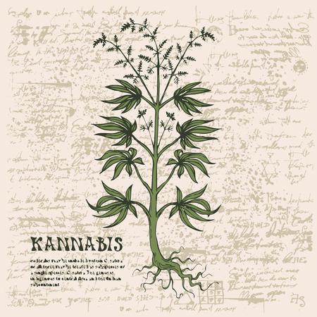 Vector banner with hand-drawn cannabis plant on abstract old papyrus background or grunge style manuscript. Hemp, Cannabis or marijuana, medicinal plant. Smoking weed Illusztráció