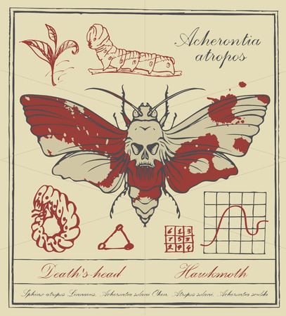 Vector banner with drawing of a Acherontia atropos and it larva, handwritten inscriptions and ink stains in retro style. Illustration of a butterfly Dead head with skull-shaped pattern on the thorax Vetores