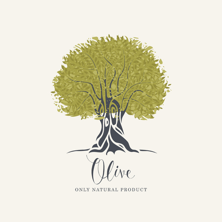 Vector banner or label with decorative olive tree with abstract green foliage and handwritten inscription on light background in retro style Illustration