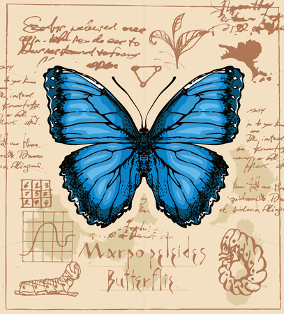 Banner with drawing of a Morpho peleides butterfly and it larva  of old manuscript with ink stains.