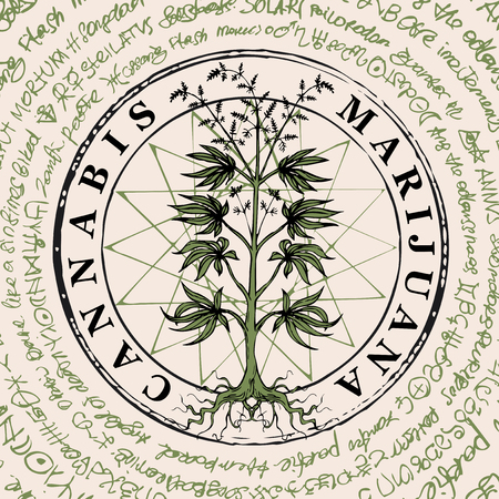 Vector banner with hand-drawn cannabis plant on the background of old illegible manuscript written in a circle. Hemp, Cannabis or marijuana, medicinal plant. Smoking weed. Medical illustration