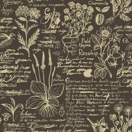 Vector seamless pattern on the theme of medicine and herbal treatment. Retro background with old hand-drawn sketches, unreadable notes, various herbs and blots. Drawing chalk on the blackboard 向量圖像