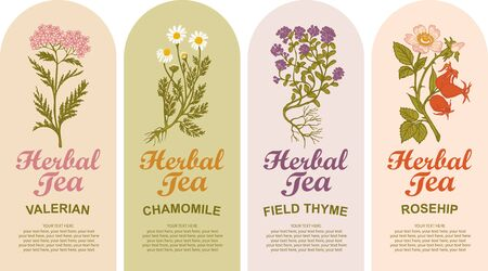 Set of vector labels for various herbal tea. Valerian, Chamomile, Field thyme, Rosehip. Tea labels with hand-drawn medicinal herbs and calligraphic inscriptions with place for text in retro style.