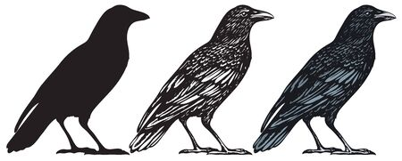 Set of three hand-drawn black birds isolated on white background. Raven, crow, rook or jackdaw. Vector illustration in retro style. Vector Illustration