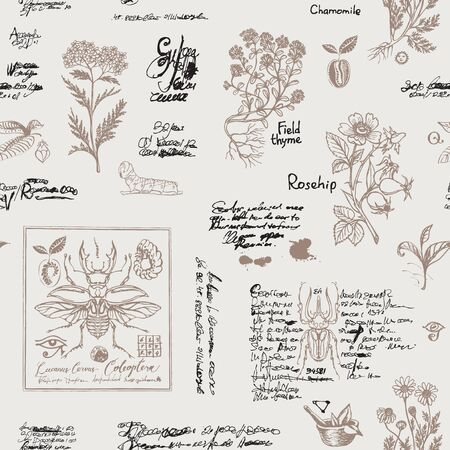 Vector seamless pattern with plants and insects in retro style. Hand-drawn beetles, medicinal herbs and unreadable scribbles on a light background. Suitable for Wallpaper, wrapping paper, fabric