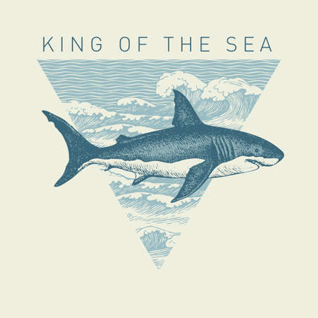 Hand-drawn illustration of a big shark and a triangle with sea waves in retro style. Vector banner on the theme of adventure, travel and discovery with the words King of the sea 向量圖像