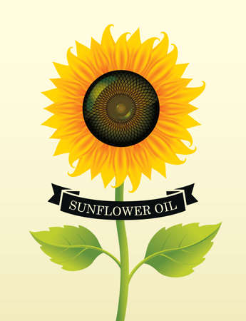 Banner or label for sunflower oil with a big blossom sunflower and green leaves on a light background. Advertising poster, vector illustration