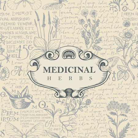 Vector banner or label for medicinal herbs in retro style. Hand-drawn background with medicinal herbs and handwritten text Lorem Ipsum 向量圖像