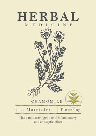 Botanical illustration of a hand-drawn chamomile plant in retro style. Vector banner or label for herbal medicine, green pharmacy or gardening. Medicinal herbs collection.