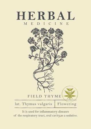 Botanical illustration of a hand-drawn field thyme plant in retro style. Vector banner or label for herbal medicine, green pharmacy or gardening. Medicinal herbs collection. Ilustração