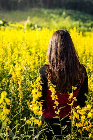 flicking: Woman standing back in yellow flower garden,  Selective focus. Stock Photo