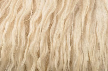 sheepskin: , fondo de textura de piel de oveja Foto de archivo