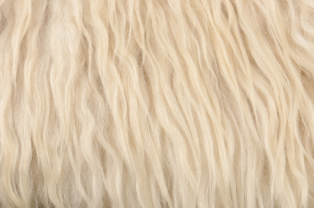 close up sheepskin texture background photo