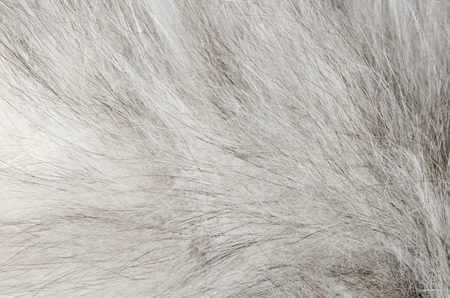 peltry: close up gray fur background