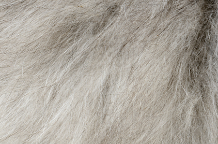 close up gray fur background