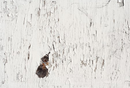 Old painted white wood. photo